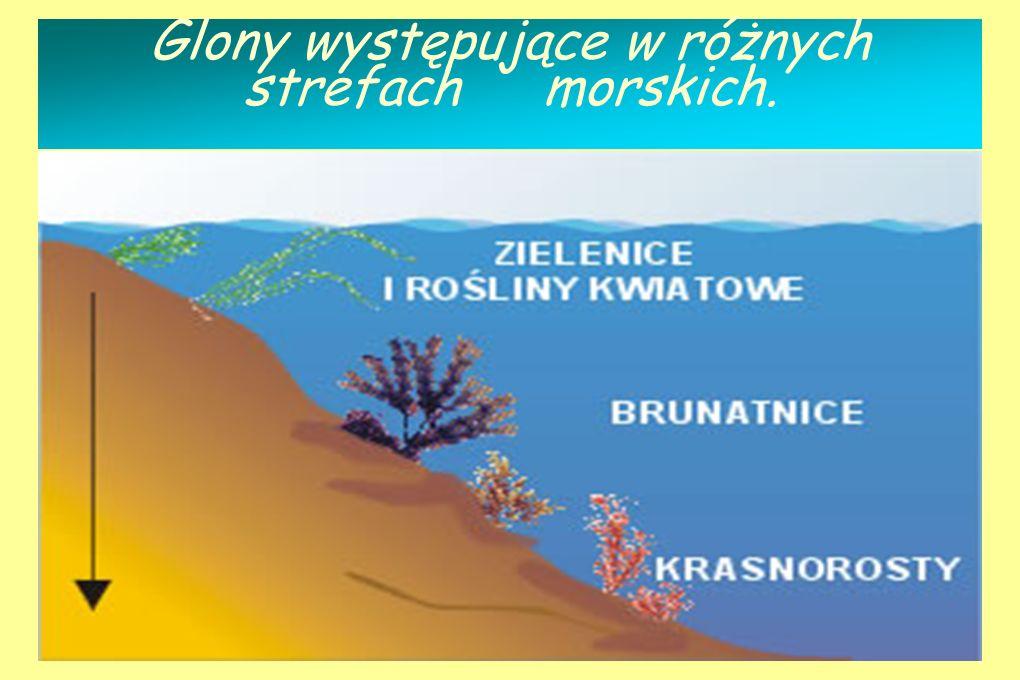 Glony występujące w różnych strefach morskich.