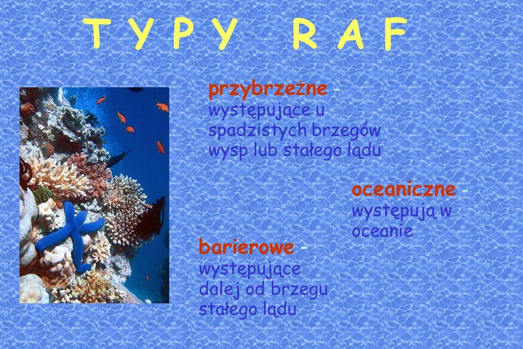 T Y P Y R A F przybrzeŻne - występujące u spadzistych brzegów wysp lub stałego lądu. oceaniczne - występują w oceanie.