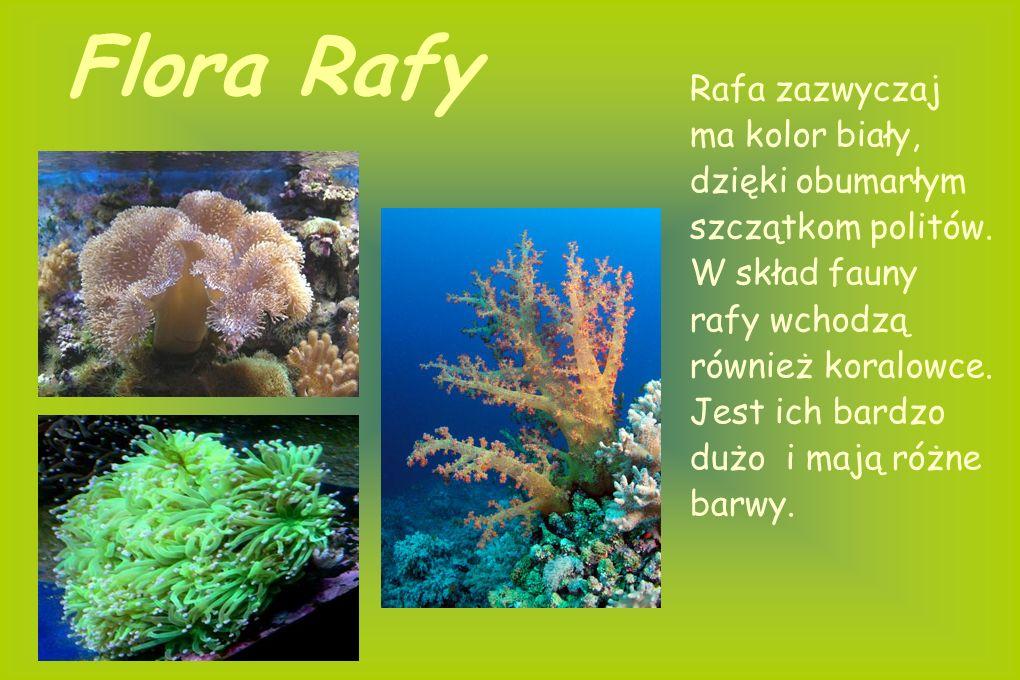 Flora Rafy Rafa zazwyczaj ma kolor biały, dzięki obumarłym szczątkom politów.