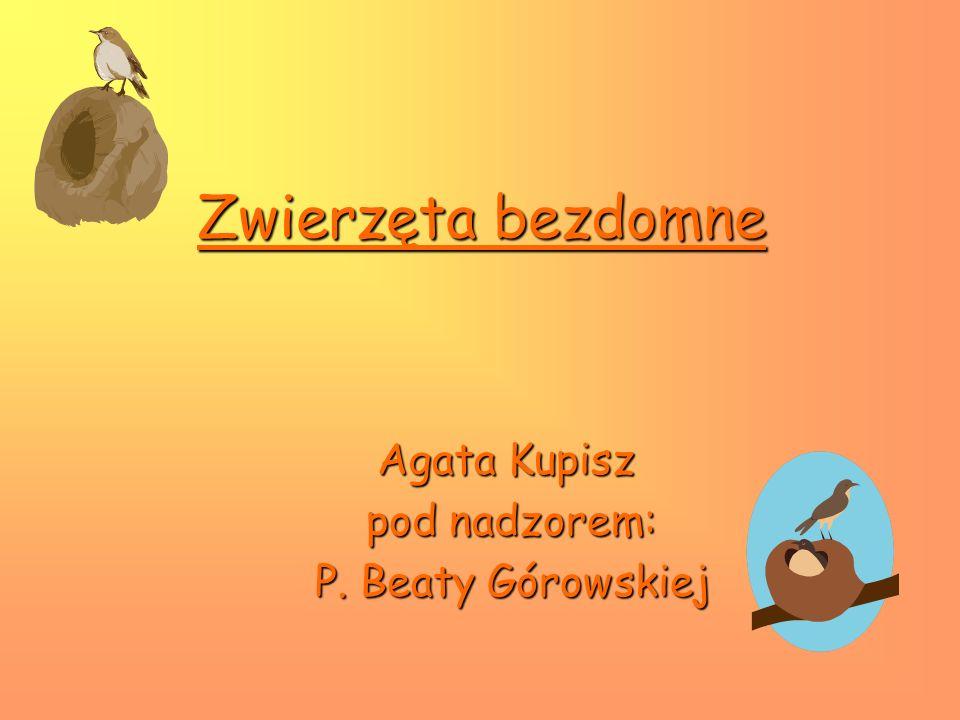 Zwierzęta bezdomne Agata Kupisz pod nadzorem: P. Beaty Górowskiej