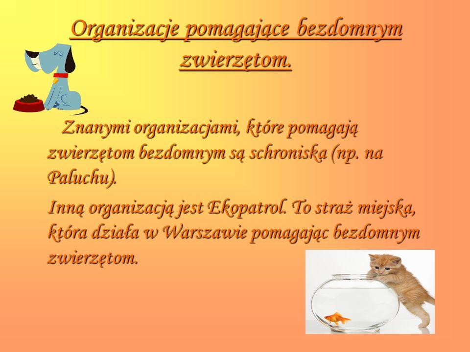 Organizacje pomagające bezdomnym zwierzętom.