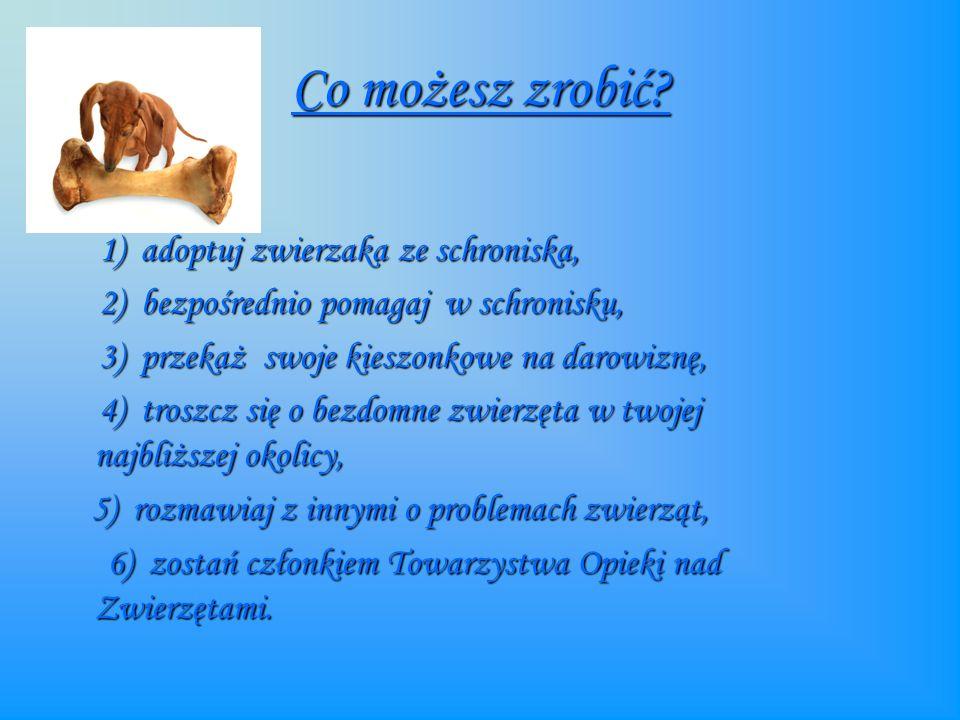 Co możesz zrobić 1) adoptuj zwierzaka ze schroniska,