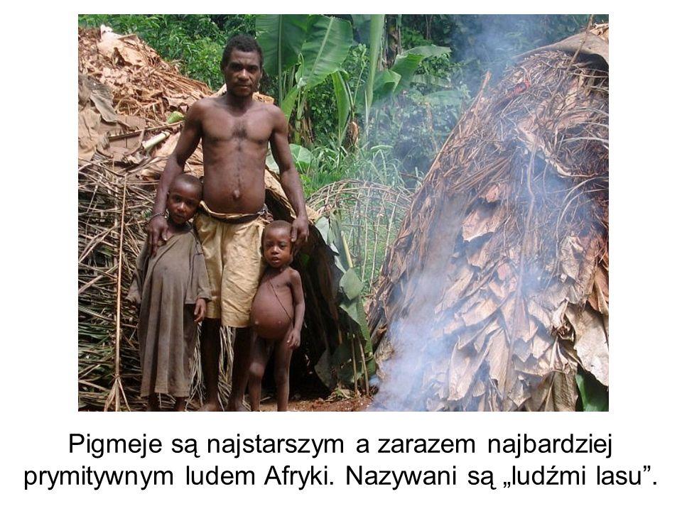 Pigmeje są najstarszym a zarazem najbardziej prymitywnym ludem Afryki