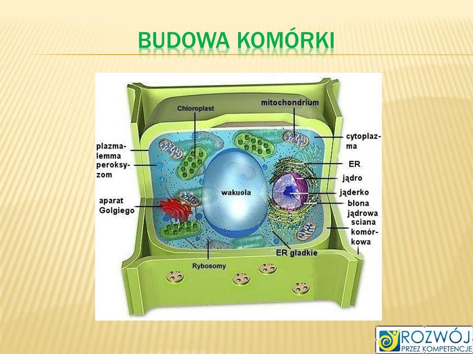 Budowa komórki