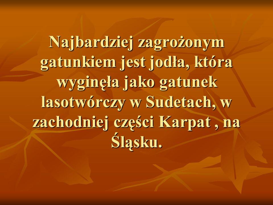 Najbardziej zagrożonym gatunkiem jest jodła, która wyginęła jako gatunek lasotwórczy w Sudetach, w zachodniej części Karpat , na Śląsku.