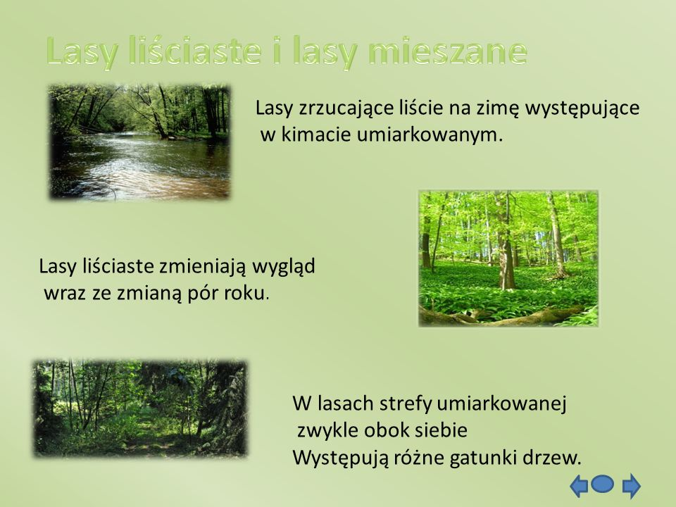 Lasy liściaste i lasy mieszane