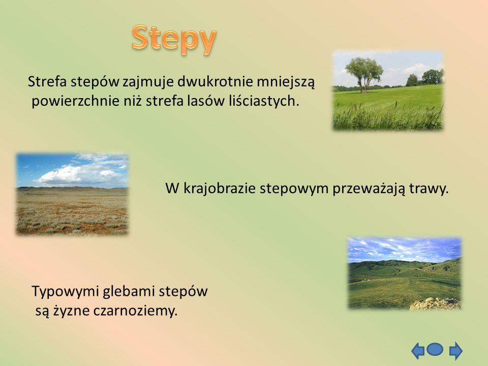 Stepy Strefa stepów zajmuje dwukrotnie mniejszą