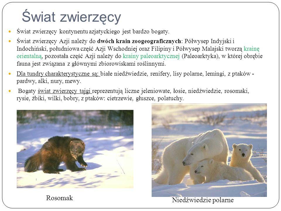 Świat zwierzęcy Rosomak Niedźwiedzie polarne