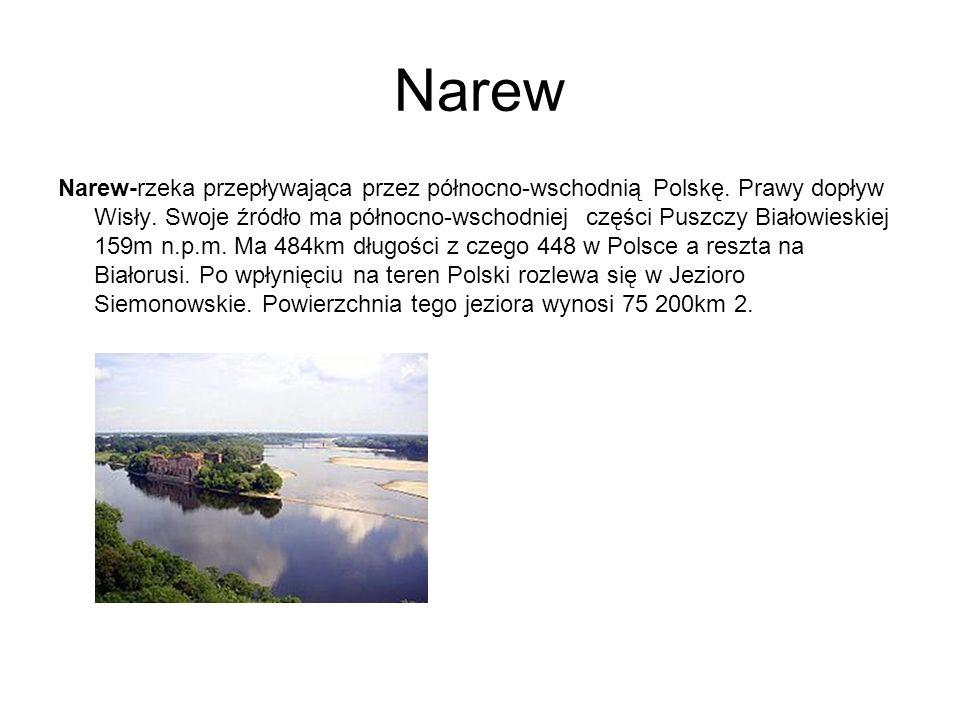 Narew