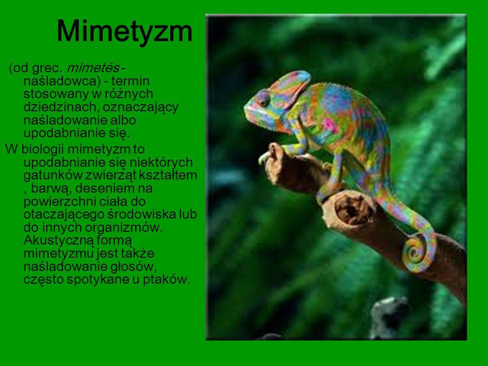 Mimetyzm (od grec. mimetés - naśladowca) - termin stosowany w różnych dziedzinach, oznaczający naśladowanie albo upodabnianie się.