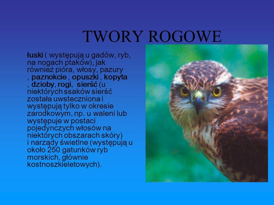 TWORY ROGOWE
