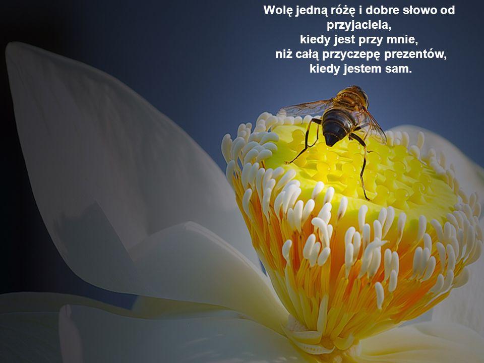 Wolę jedną różę i dobre słowo od przyjaciela, kiedy jest przy mnie,