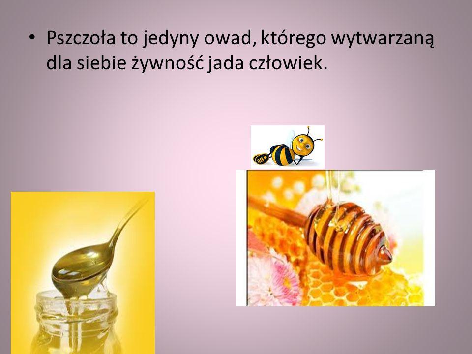 Pszczoła to jedyny owad, którego wytwarzaną dla siebie żywność jada człowiek.