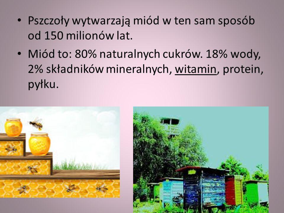 Pszczoły wytwarzają miód w ten sam sposób od 150 milionów lat.