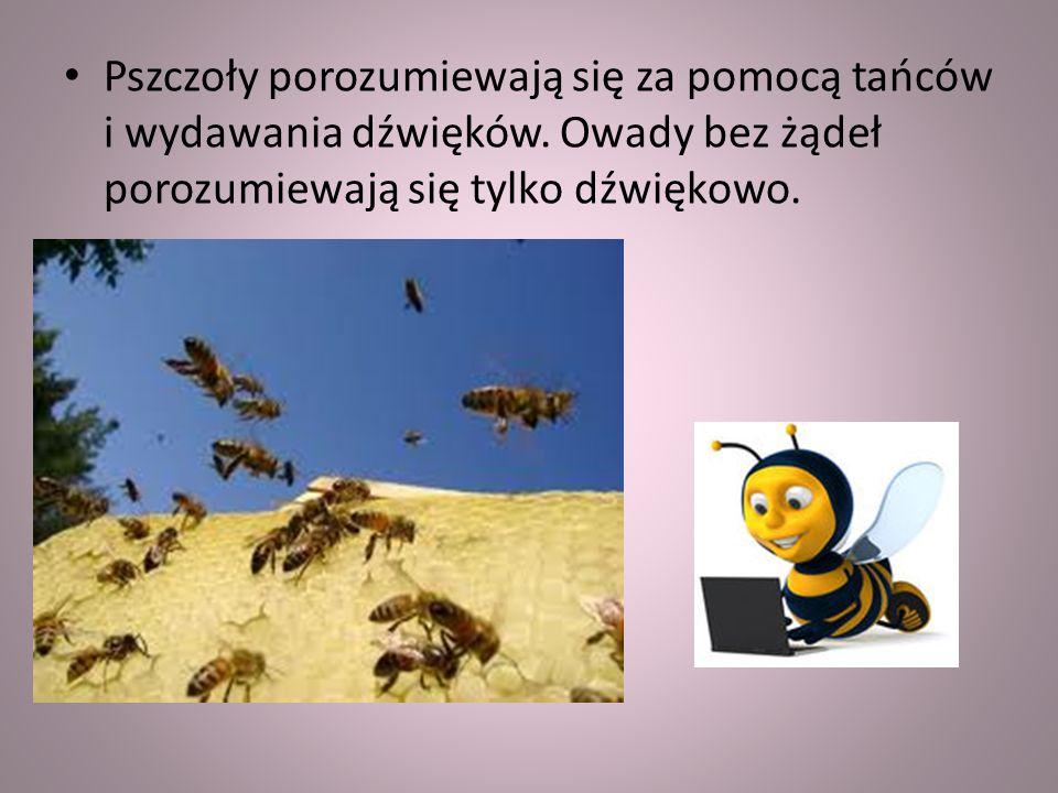 Pszczoły porozumiewają się za pomocą tańców i wydawania dźwięków