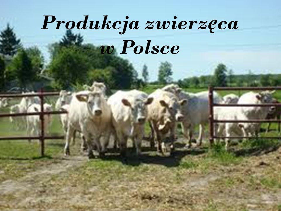 Produkcja zwierzęca w Polsce