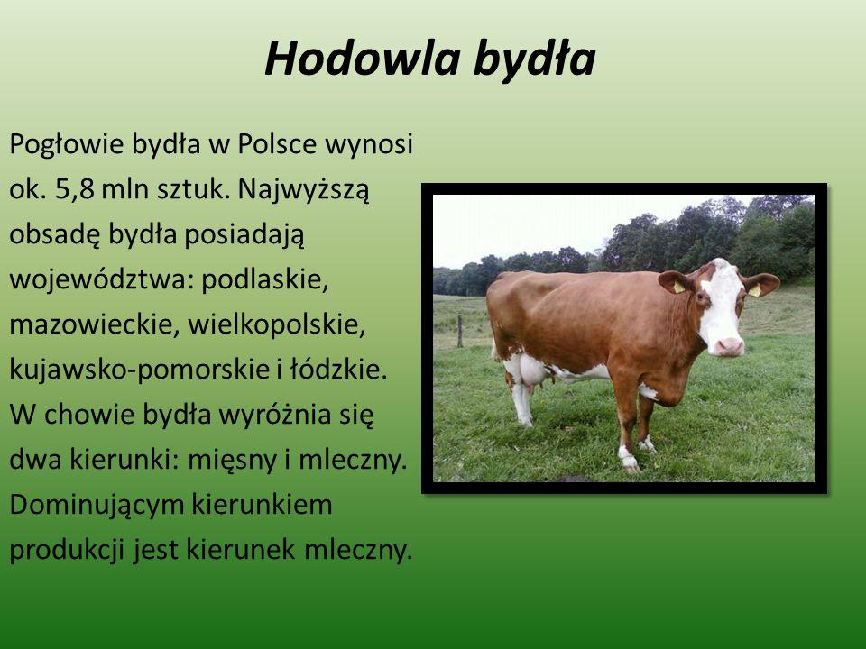 Hodowla bydła