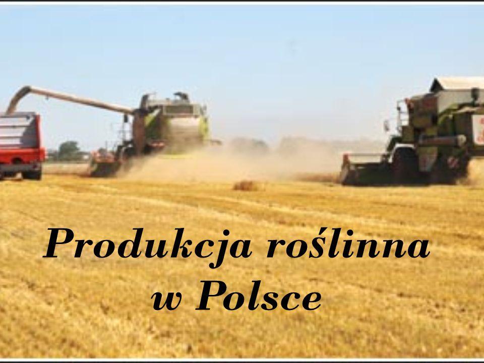 Produkcja roślinna w Polsce