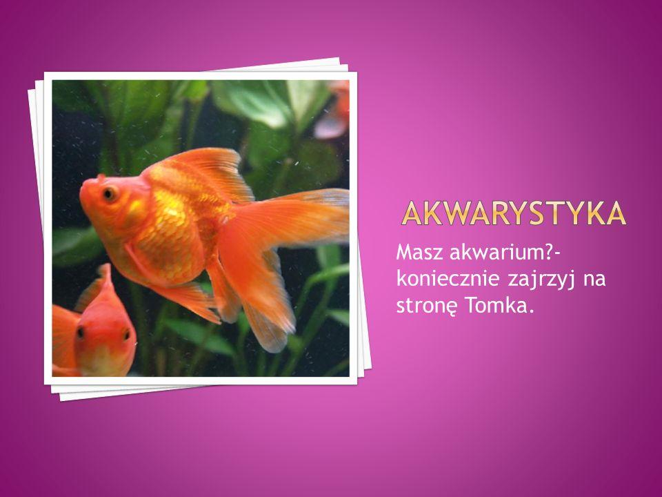 Akwarystyka Masz akwarium - koniecznie zajrzyj na stronę Tomka.