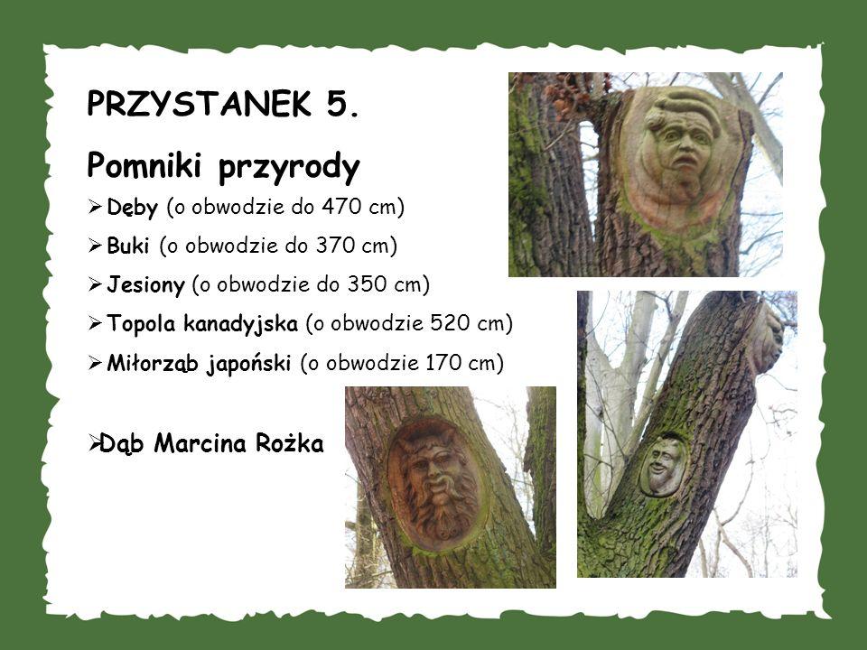 PRZYSTANEK 5. Pomniki przyrody Dąb Marcina Rożka