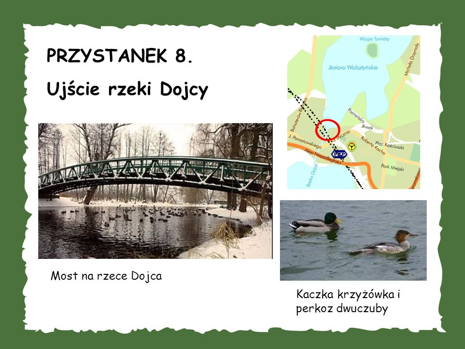 PRZYSTANEK 8. Ujście rzeki Dojcy Most na rzece Dojca