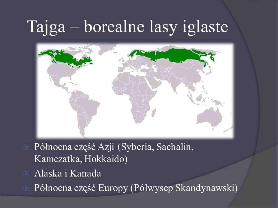 Tajga – borealne lasy iglaste