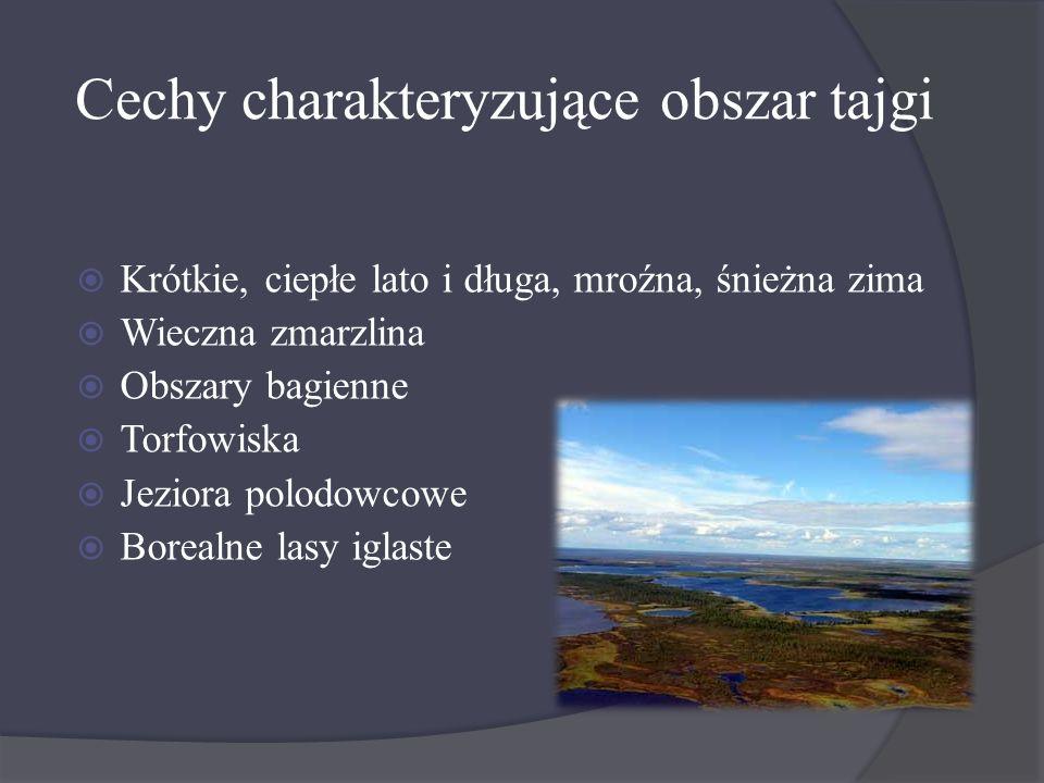 Cechy charakteryzujące obszar tajgi