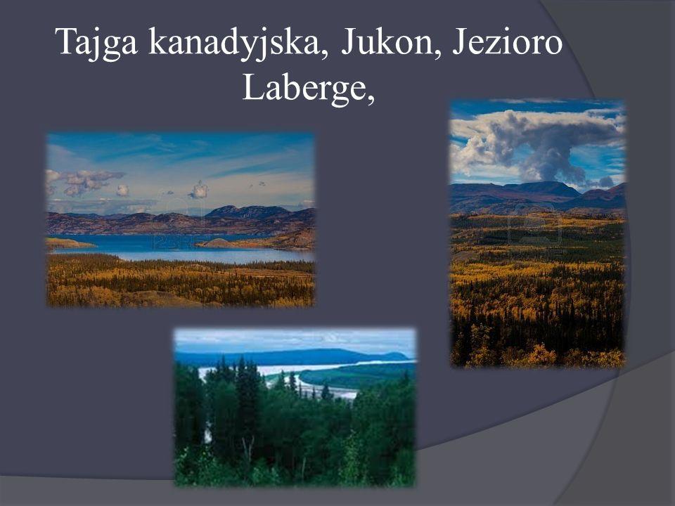 Tajga kanadyjska, Jukon, Jezioro Laberge,