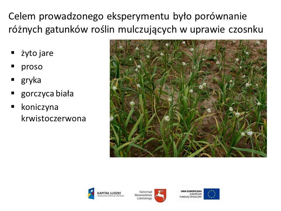 Celem prowadzonego eksperymentu było porównanie różnych gatunków roślin mulczujących w uprawie czosnku