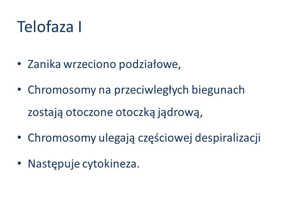 Telofaza I Zanika wrzeciono podziałowe,