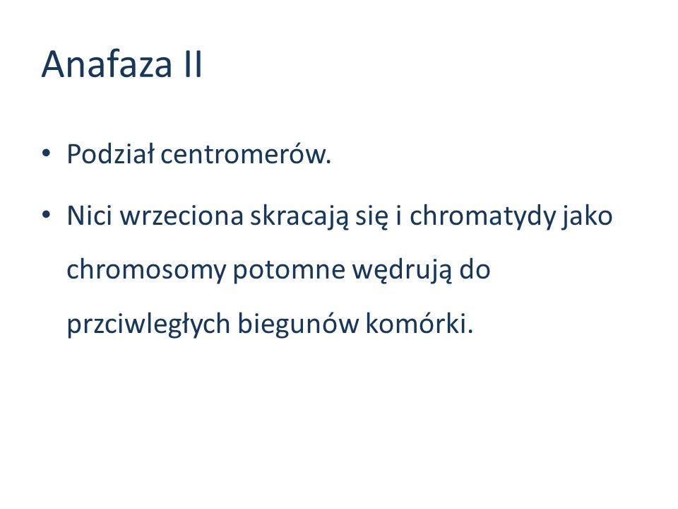 Anafaza II Podział centromerów.