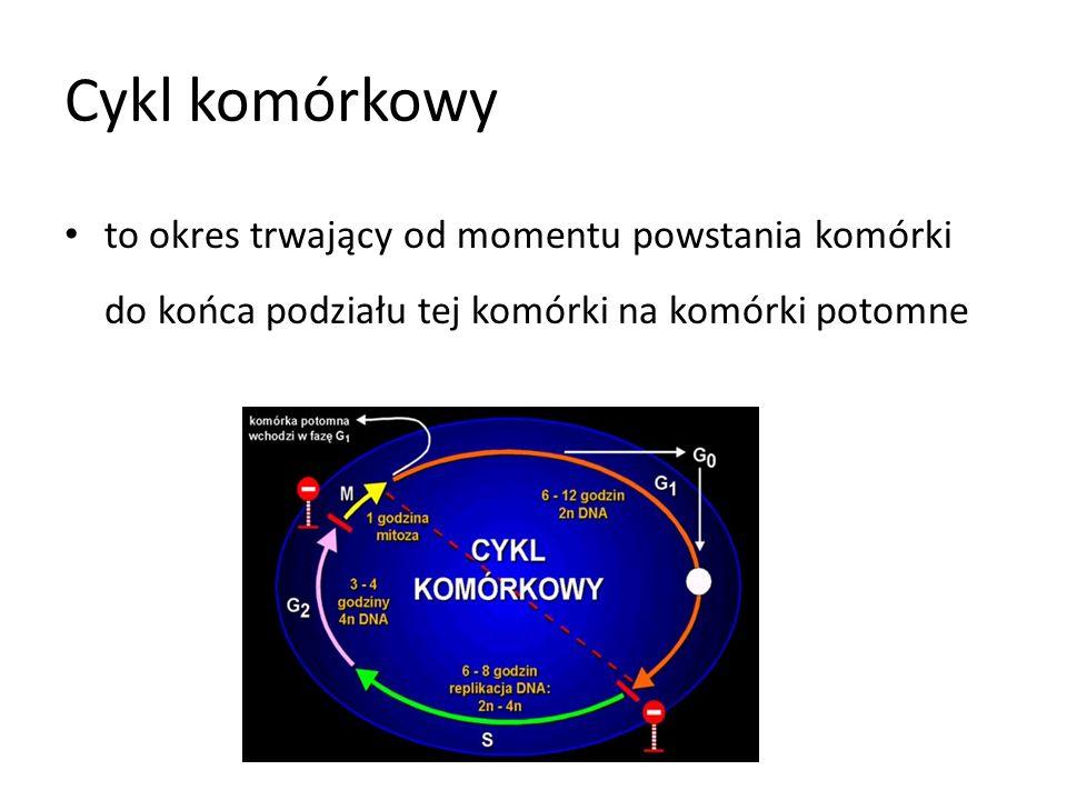 Cykl komórkowyto okres trwający od momentu powstania komórki do końca podziału tej komórki na komórki potomne.
