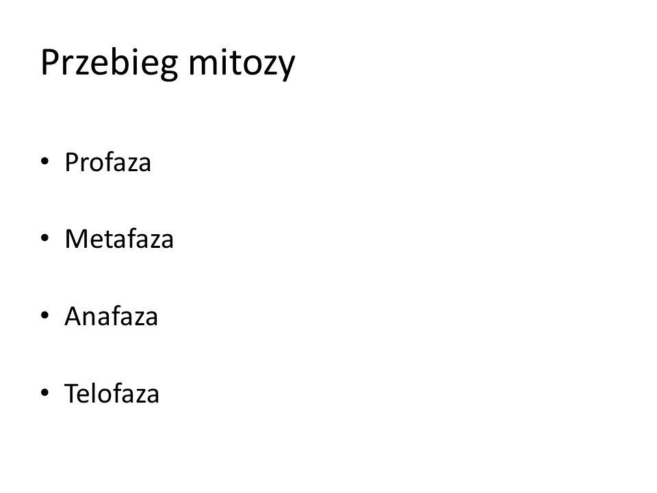Przebieg mitozy Profaza Metafaza Anafaza Telofaza