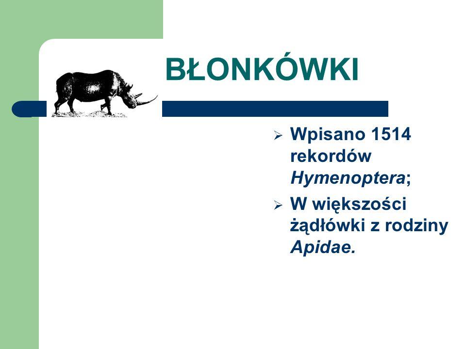 BŁONKÓWKI Wpisano 1514 rekordów Hymenoptera;