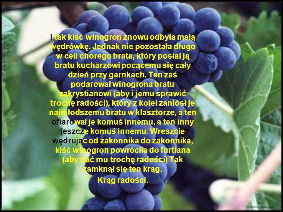 I tak kiść winogron znowu odbyła małą wędrówkę