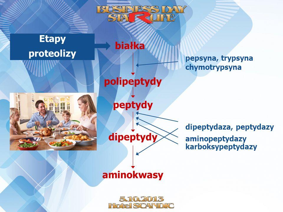 białka polipeptydy peptydy dipeptydy aminokwasy