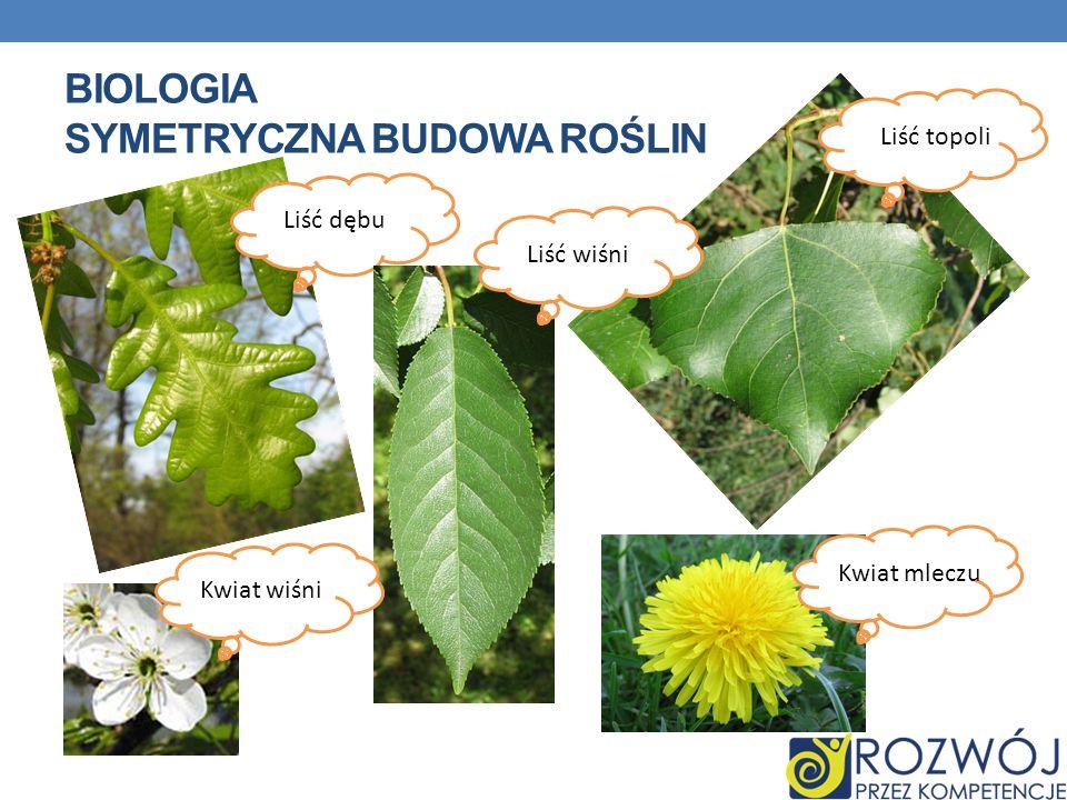 Biologia Symetryczna budowa roślin