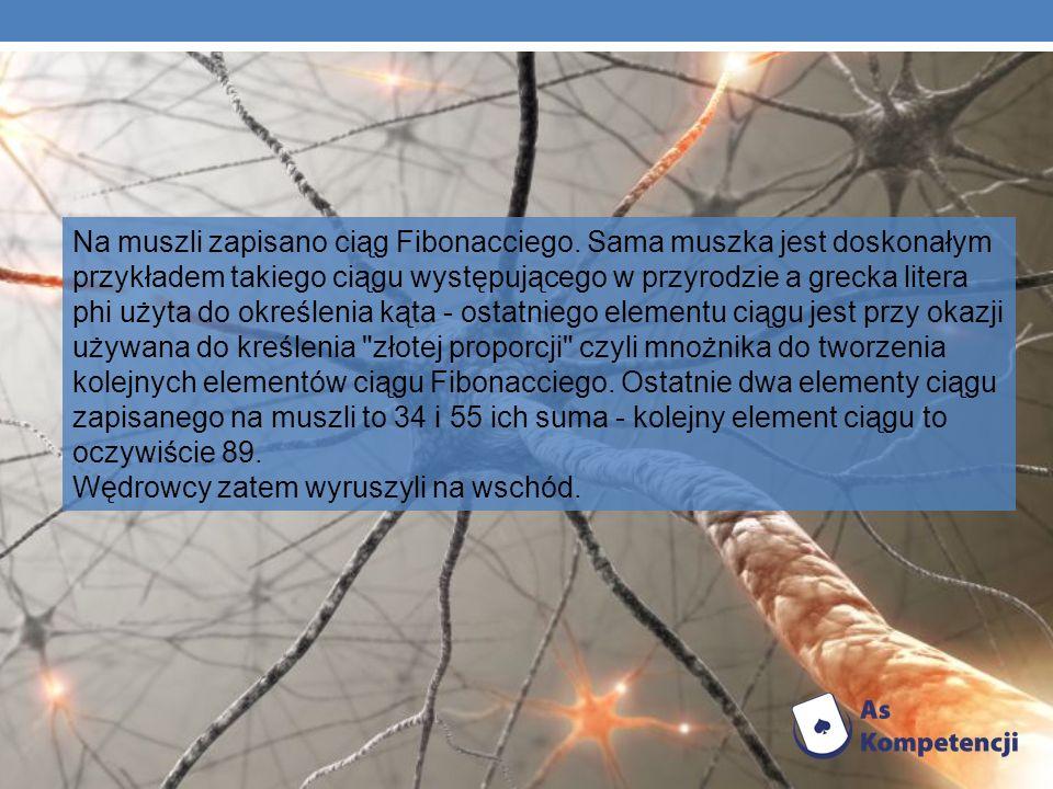 Na muszli zapisano ciąg Fibonacciego