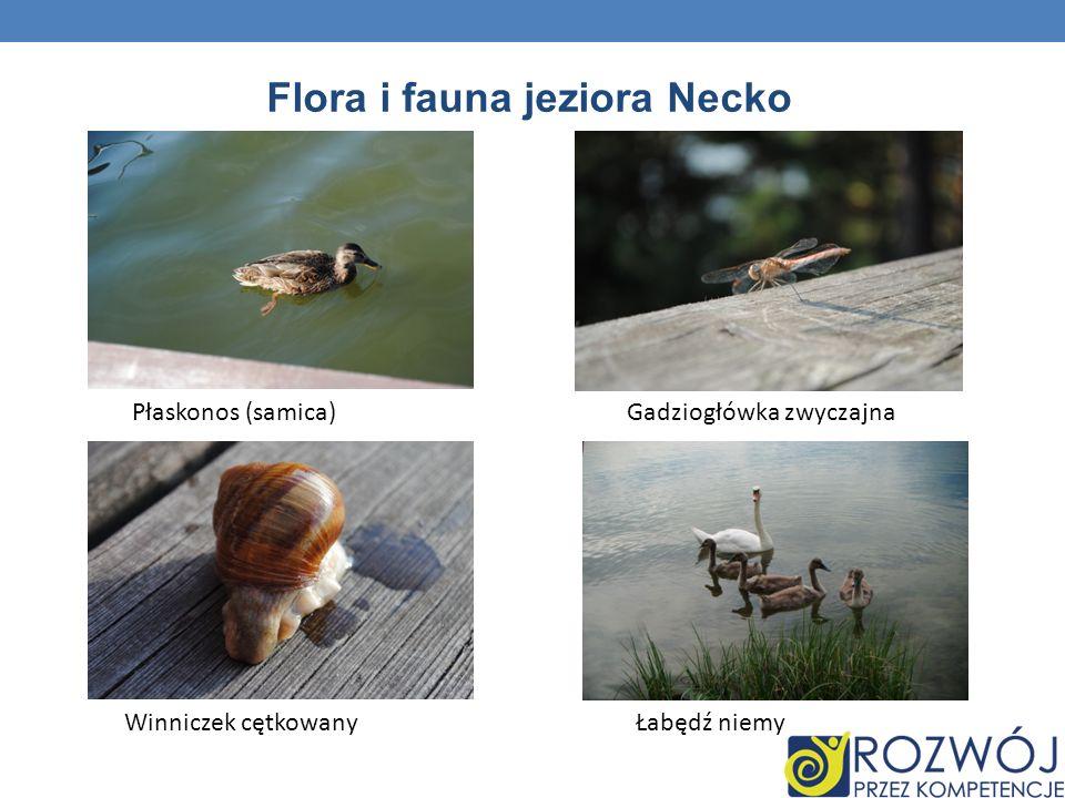 Flora i fauna jeziora Necko