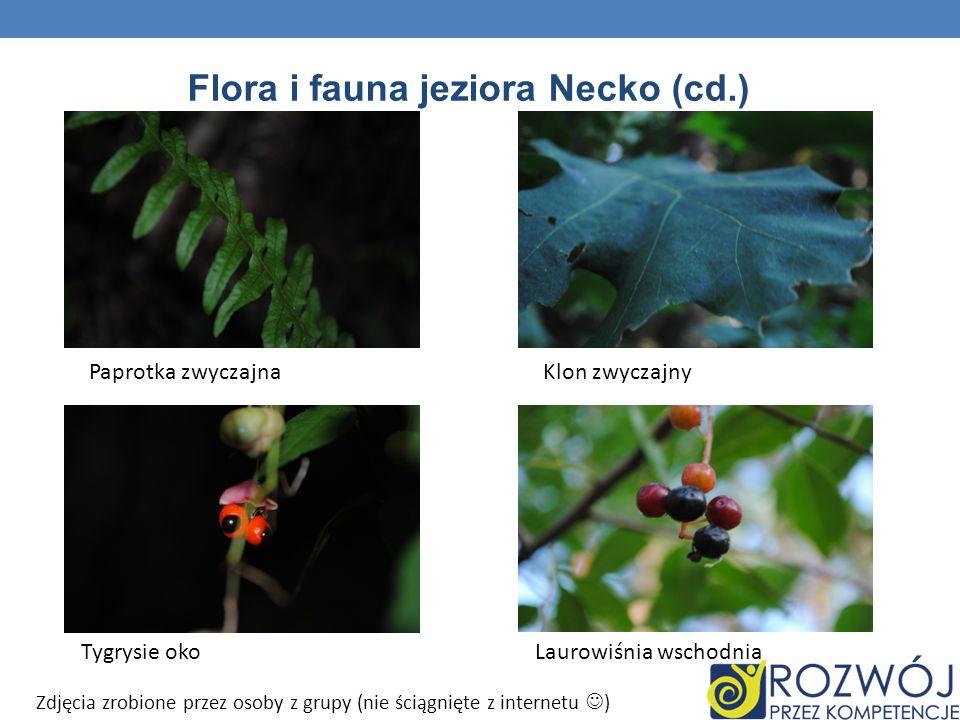 Flora i fauna jeziora Necko (cd.)