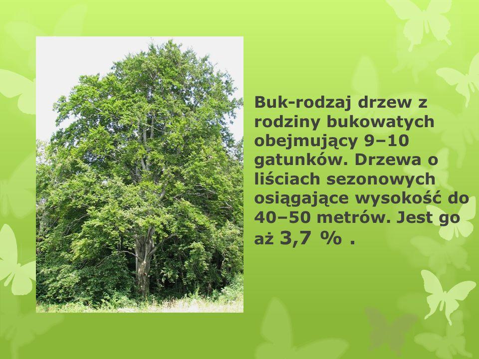 Buk-rodzaj drzew z rodziny bukowatych obejmujący 9–10 gatunków