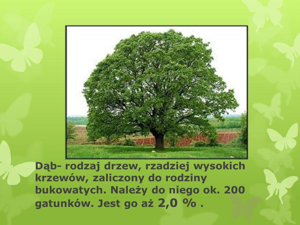 Dąb- rodzaj drzew, rzadziej wysokich krzewów, zaliczony do rodziny bukowatych.