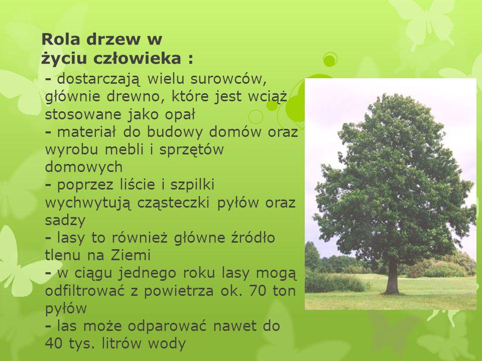 Rola drzew w życiu człowieka :