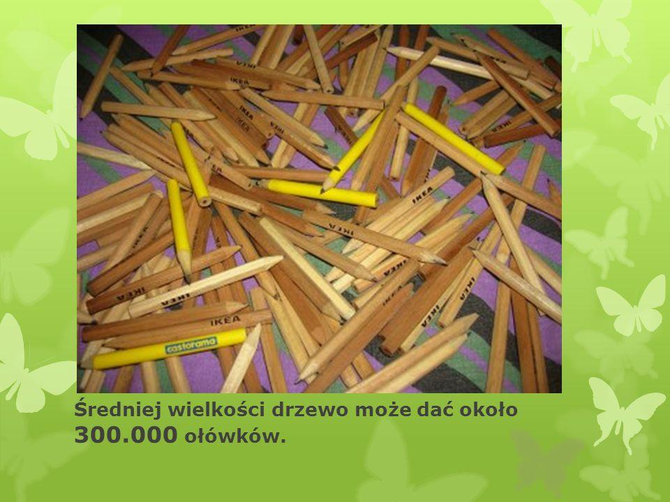 Średniej wielkości drzewo może dać około 300.000 ołówków.