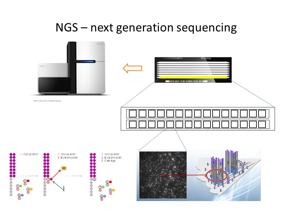 NGS – next generation sequencing