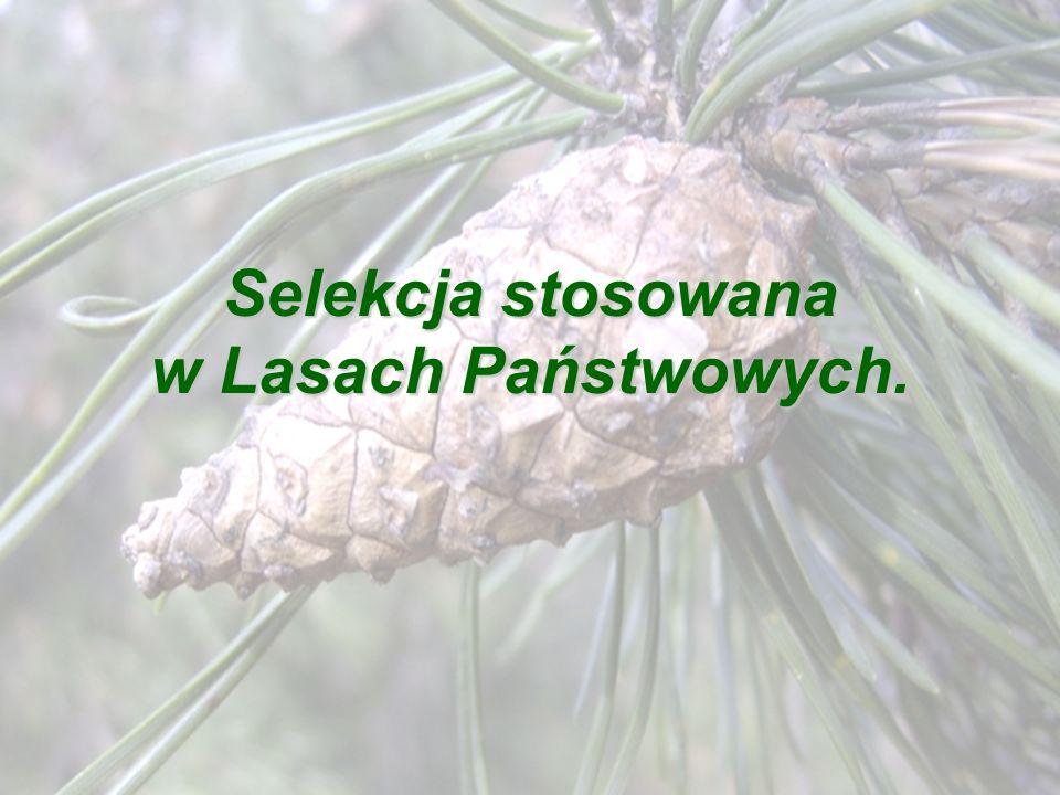 Selekcja stosowana w Lasach Państwowych.