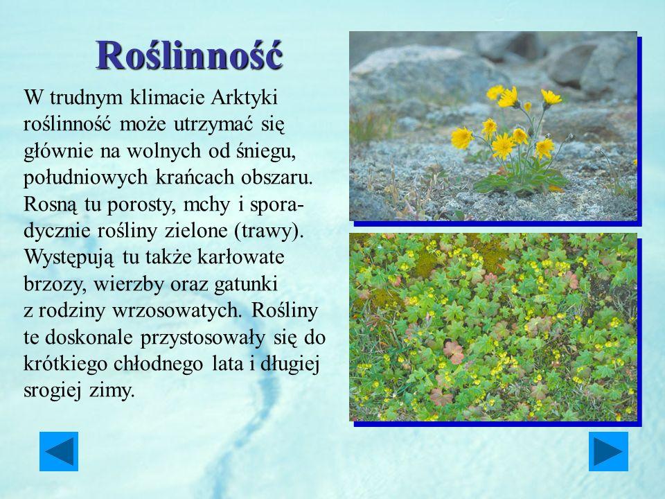 Roślinność W trudnym klimacie Arktyki roślinność może utrzymać się głównie na wolnych od śniegu, południowych krańcach obszaru.