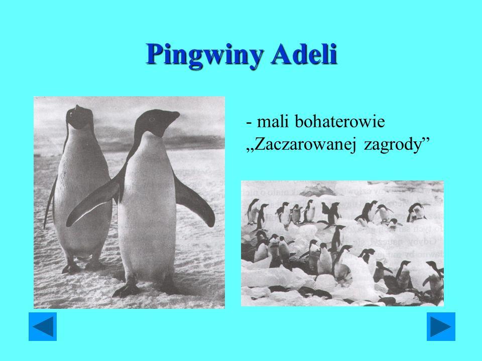 """Pingwiny Adeli - mali bohaterowie """"Zaczarowanej zagrody"""