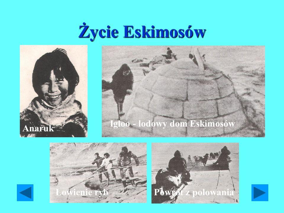 Życie Eskimosów Igloo - lodowy dom Eskimosów Anaruk Łowienie ryb