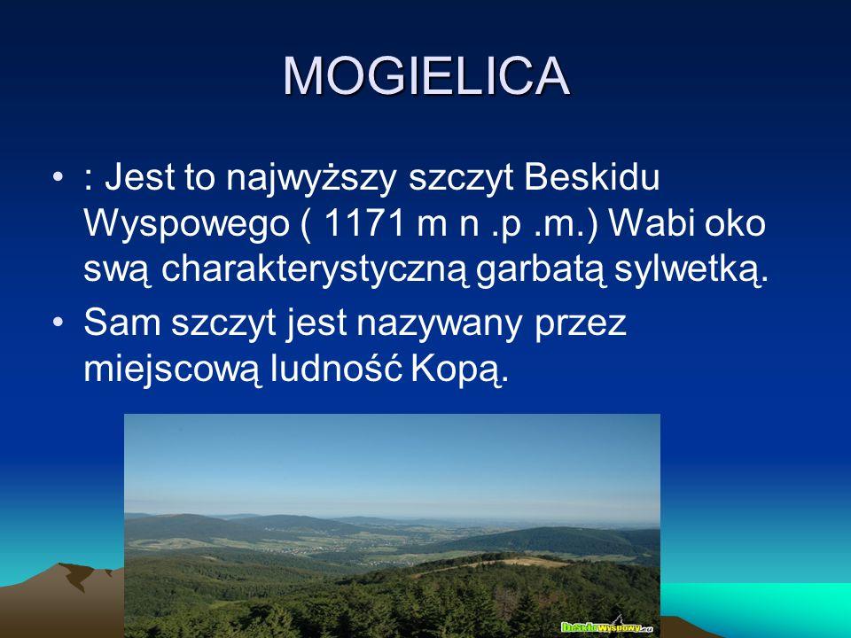 MOGIELICA : Jest to najwyższy szczyt Beskidu Wyspowego ( 1171 m n .p .m.) Wabi oko swą charakterystyczną garbatą sylwetką.